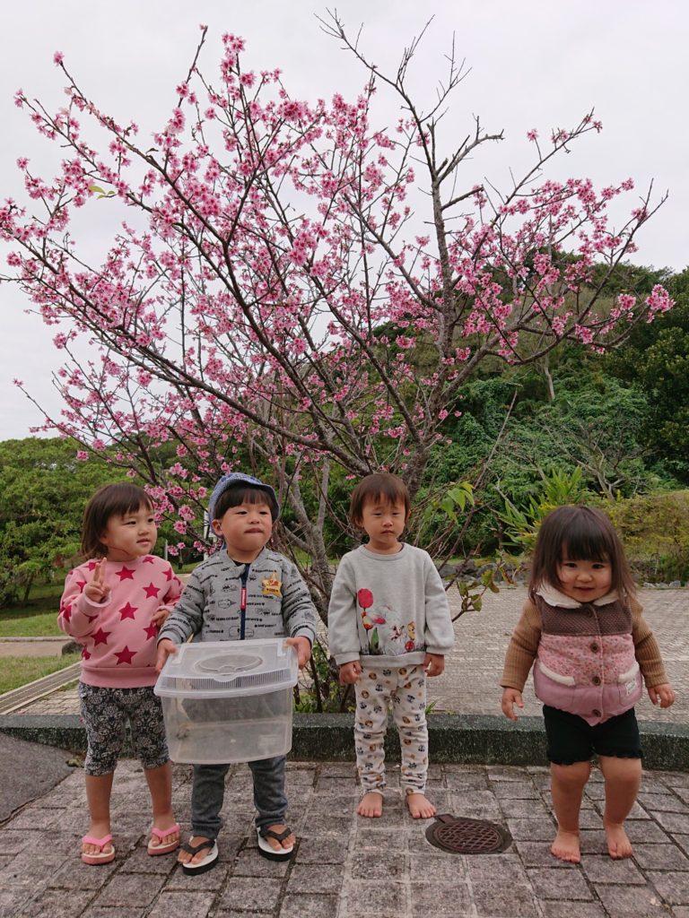 3回目の桜